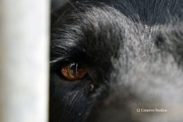 Daisy the dog eye photography print