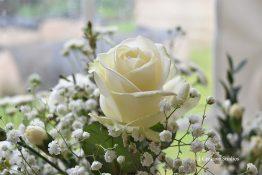 Rose photography print