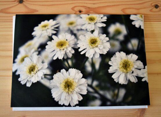 Daisies photograph blank greeting card