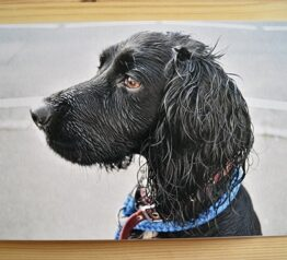 Daisy the dog photograph blank greeting card